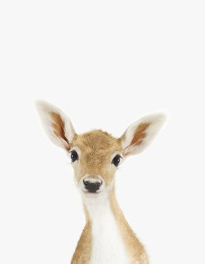 Risultati immagini per baby fox portrait