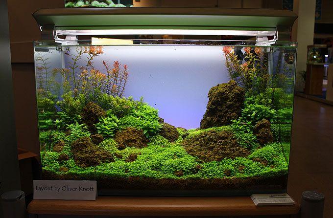 Planted Aquarium Aquascape
