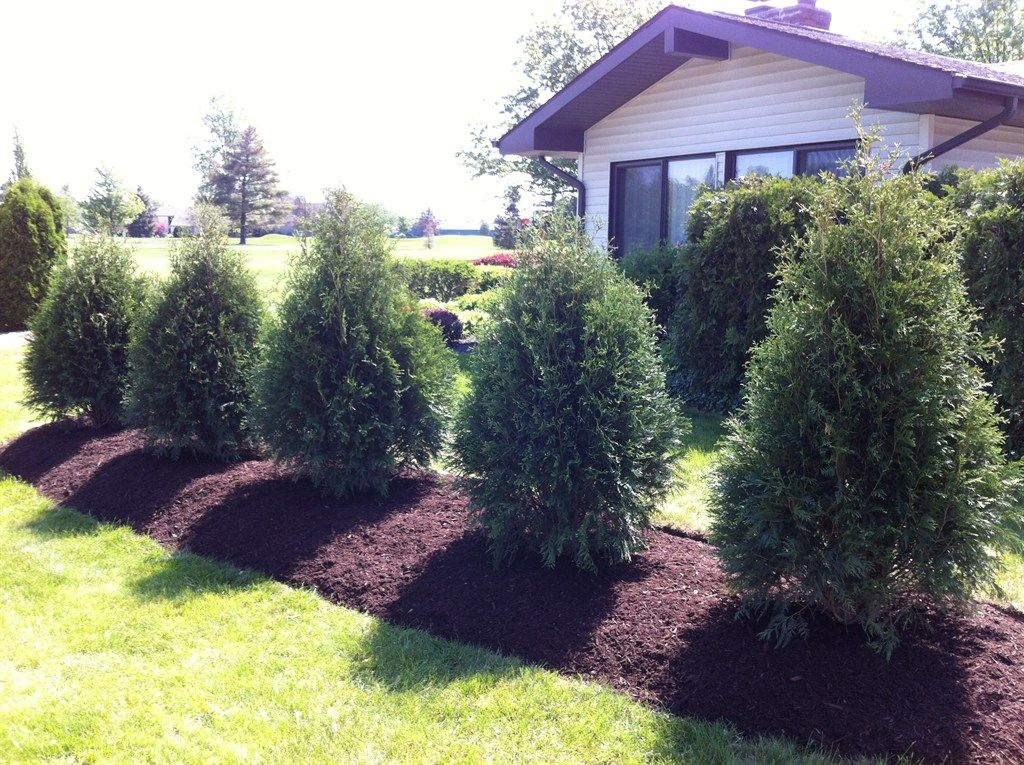 Landscape divider between to properties deals privacy for Lawn divider