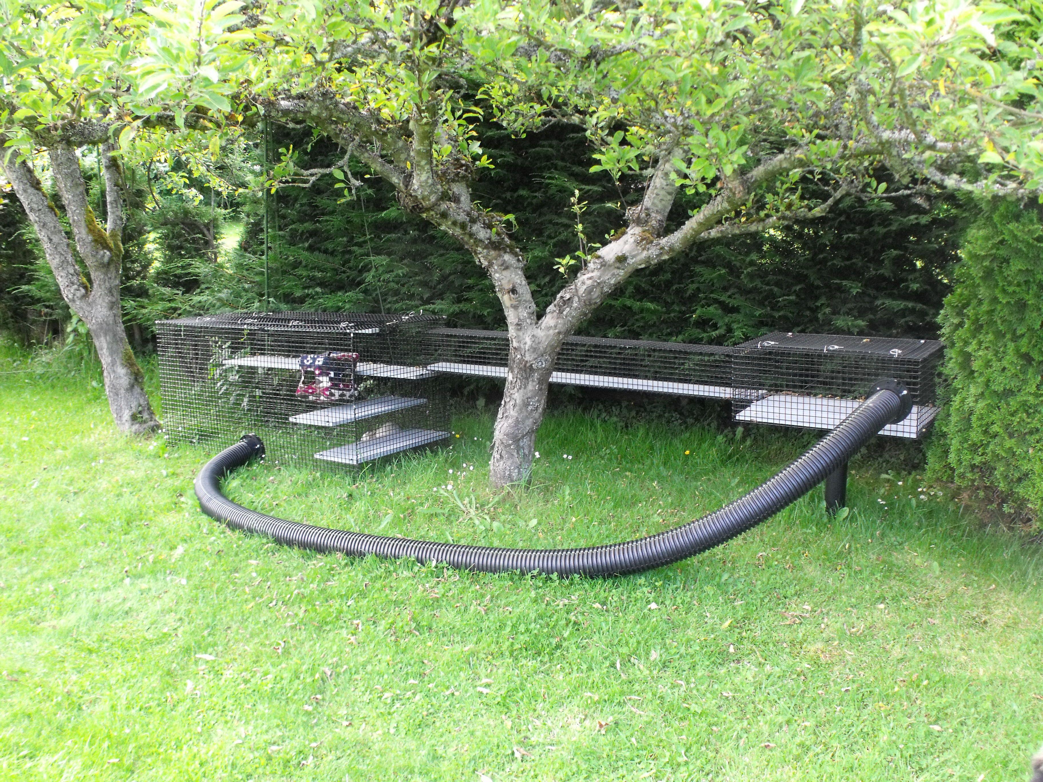 Ferret fun-in-the-sun Beautiful World Living Environments  www.abeautifulworld.