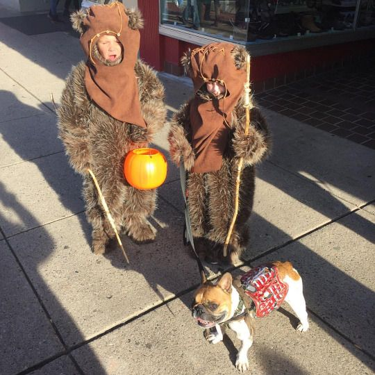 Bonjour Nino French Bulldog With Ewoks For Halloween French