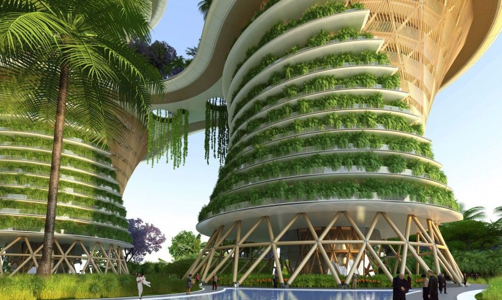 Terrace gardens with organic farming a fad in India