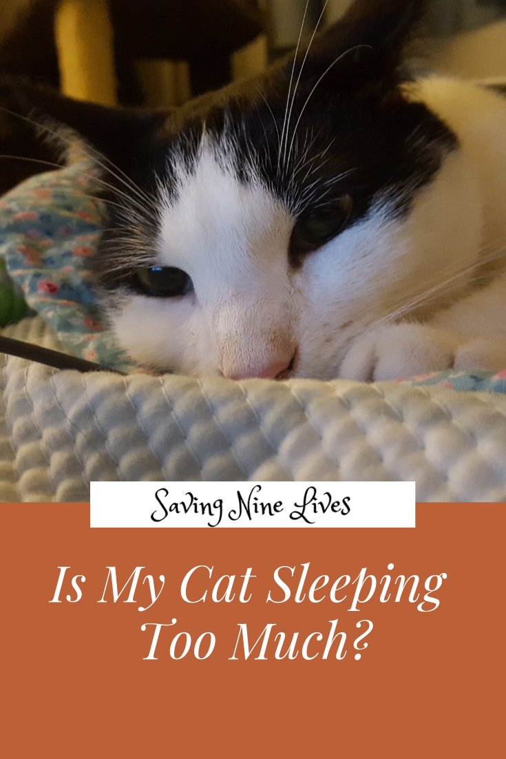 Learn More About Cat Behavior And Why It S Important For Cats To Nap Cat Quotes Funny Cat Sleeping Cat Care