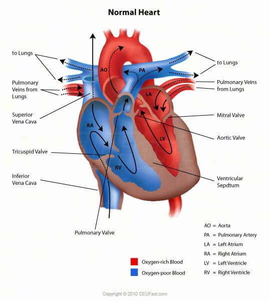 CEUfast.com - Normal Heart | heart diagram | Pinterest | Cardiac anatomy