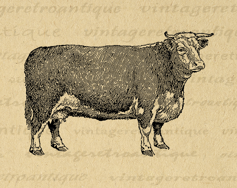 This Item Is Unavailable Etsy Clip Art Vintage Cow Graphic Antique Artwork