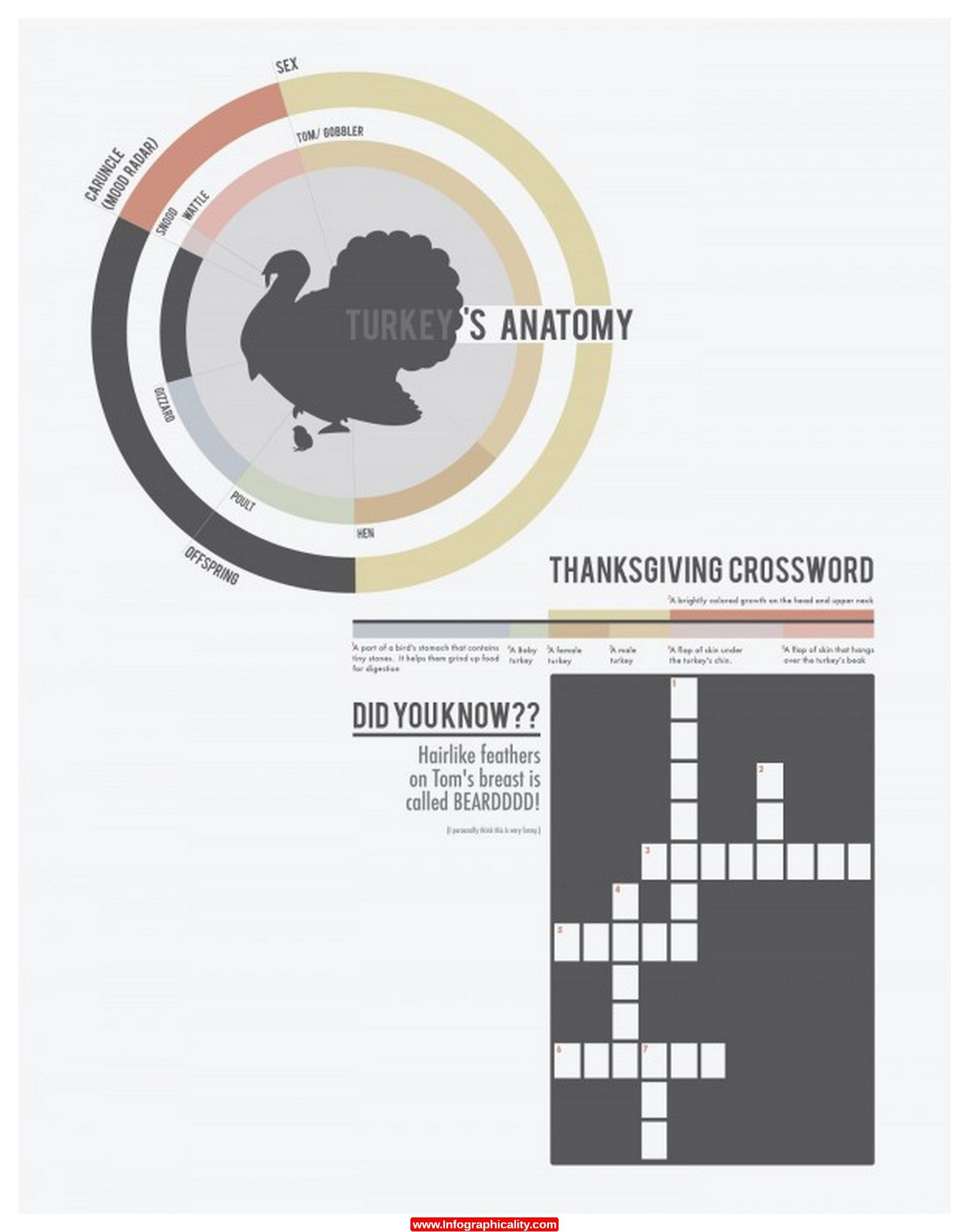 Turkey Anatomy Body Parts Animals 1 600x769 Infographic - http ...