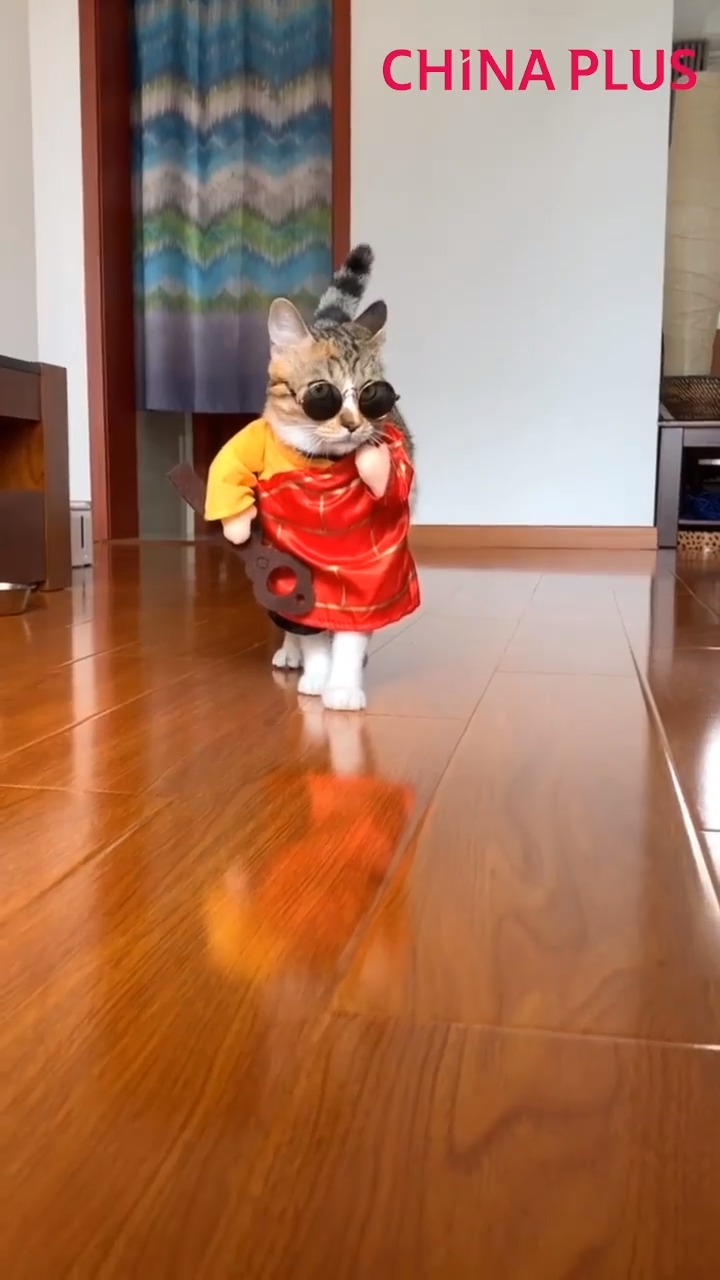 Funny cat walk, cat in costume showing her sassy walk. #cat #catvideos