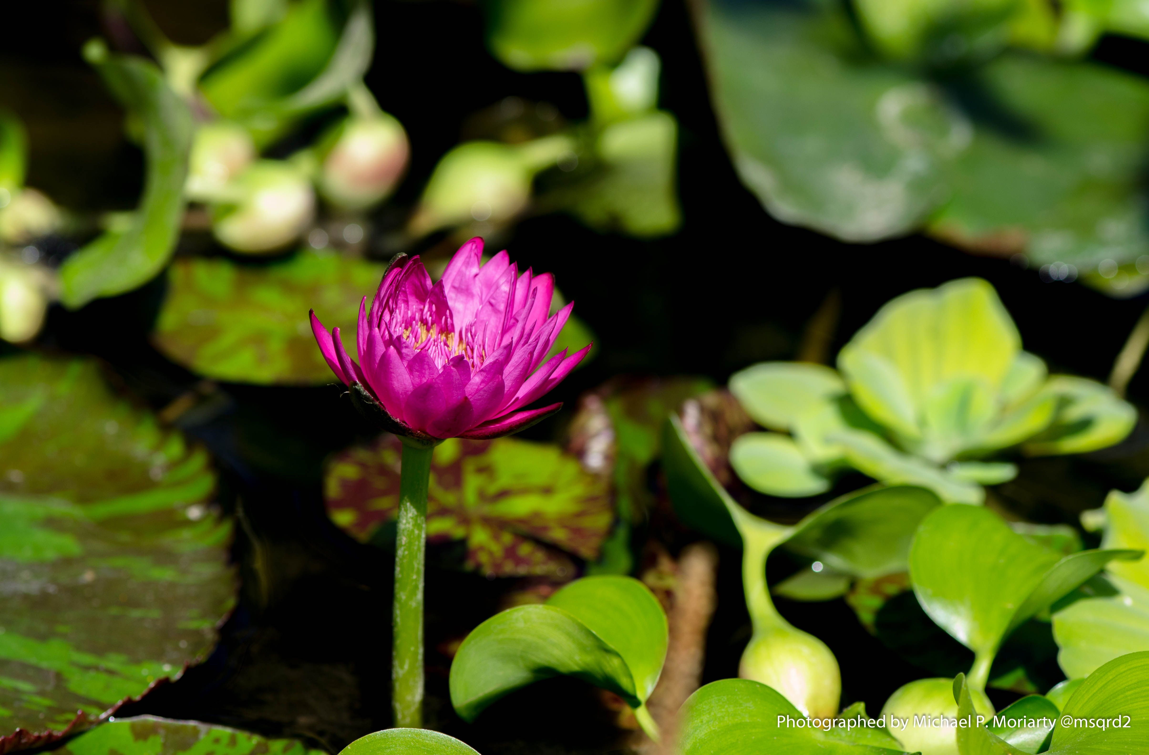 Water Lilly New Mexico Trust Me Im A Flower Photographer Pinterest