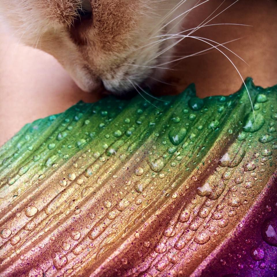 Finfolk Productions: Raindrops on heel fins and whiskers on kittens! You never know what kinds of magic we weave into our mermaid tails here at Finfolk Productions! Today, kitty kisses!