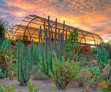 Landscaping Ideas from the Desert Botanical Garden ...