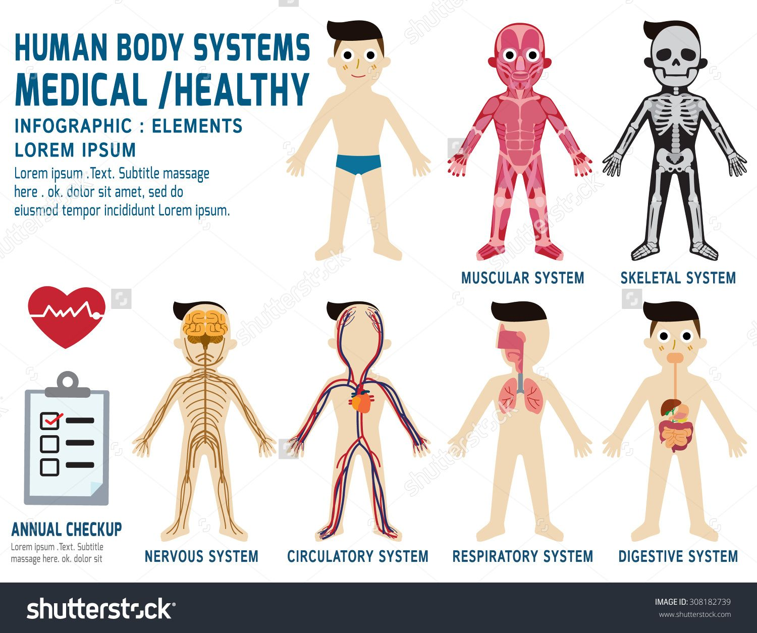 Human Organ Systems Chart Human Body Systems Annual Checkupanatomy ...