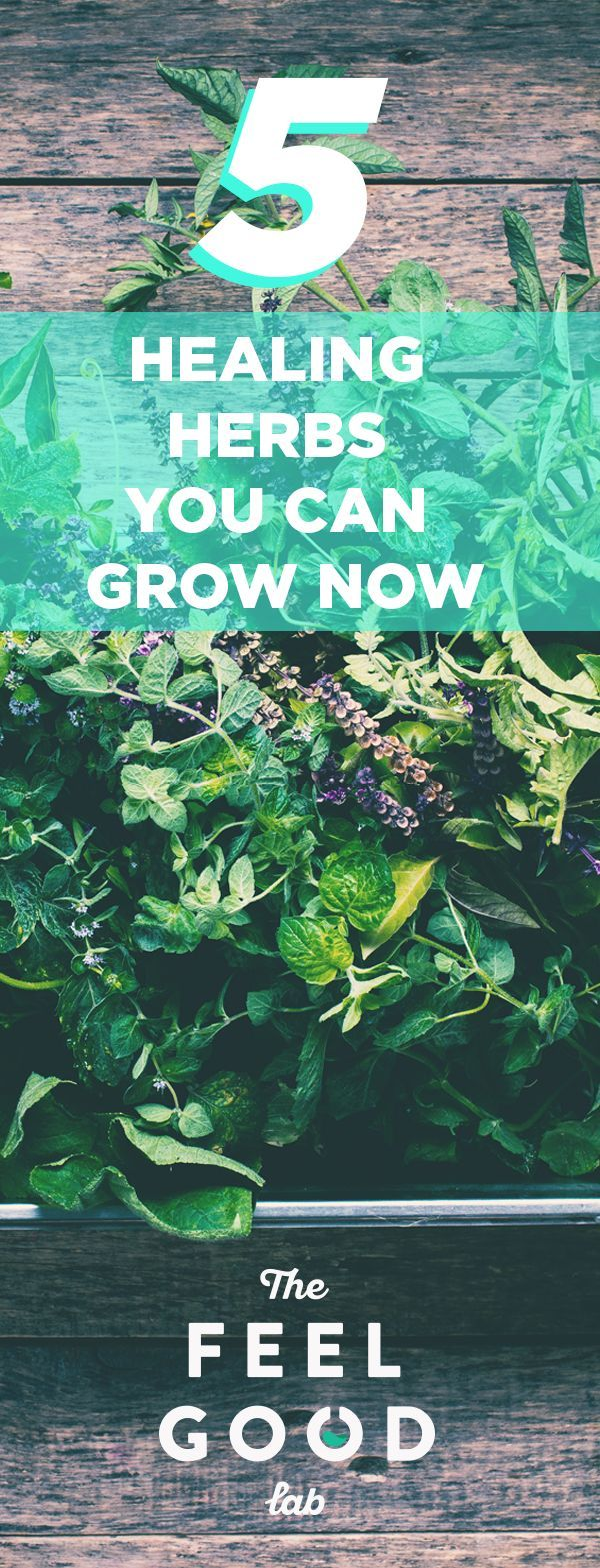 How to Grow Anti-Inflammatory Herbs and Plants at Home | :: Natural ...