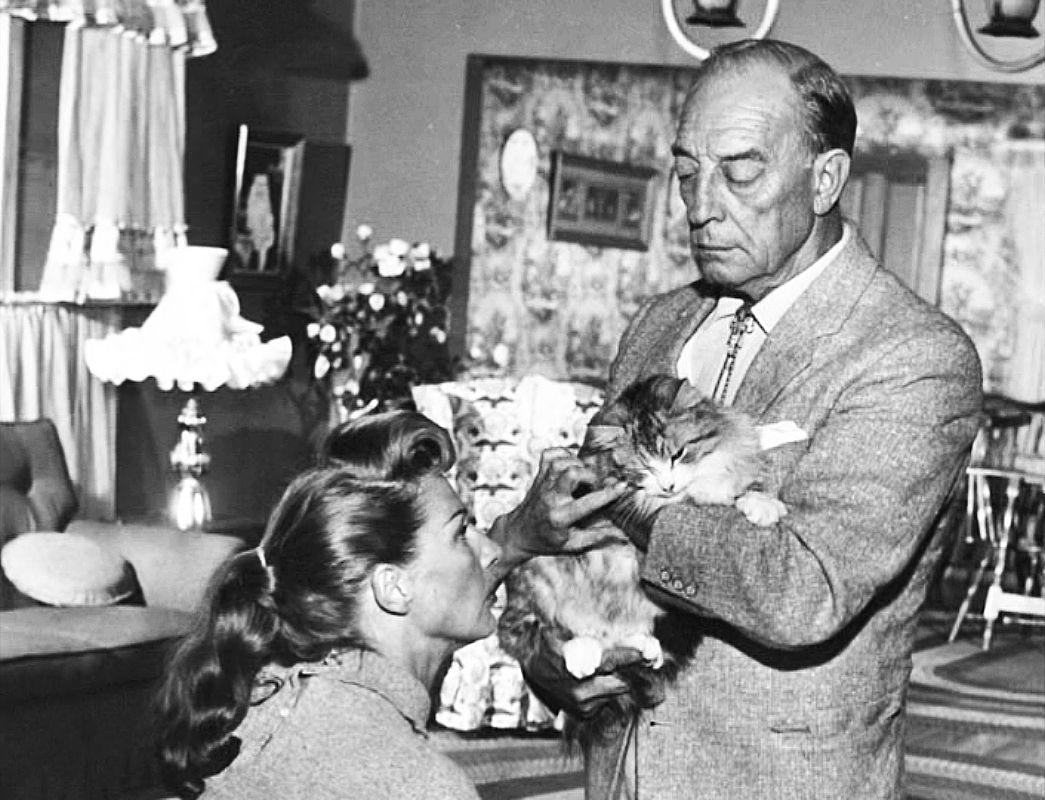 Buster Keaton Cat Lovers Crazy Cat People Cat People