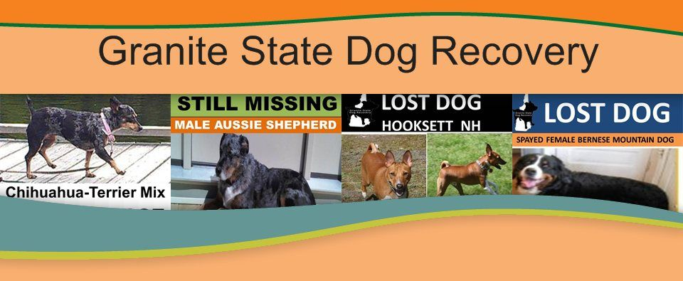 Granite State Dog Recovery Helping To Reunite Lost Dogs With