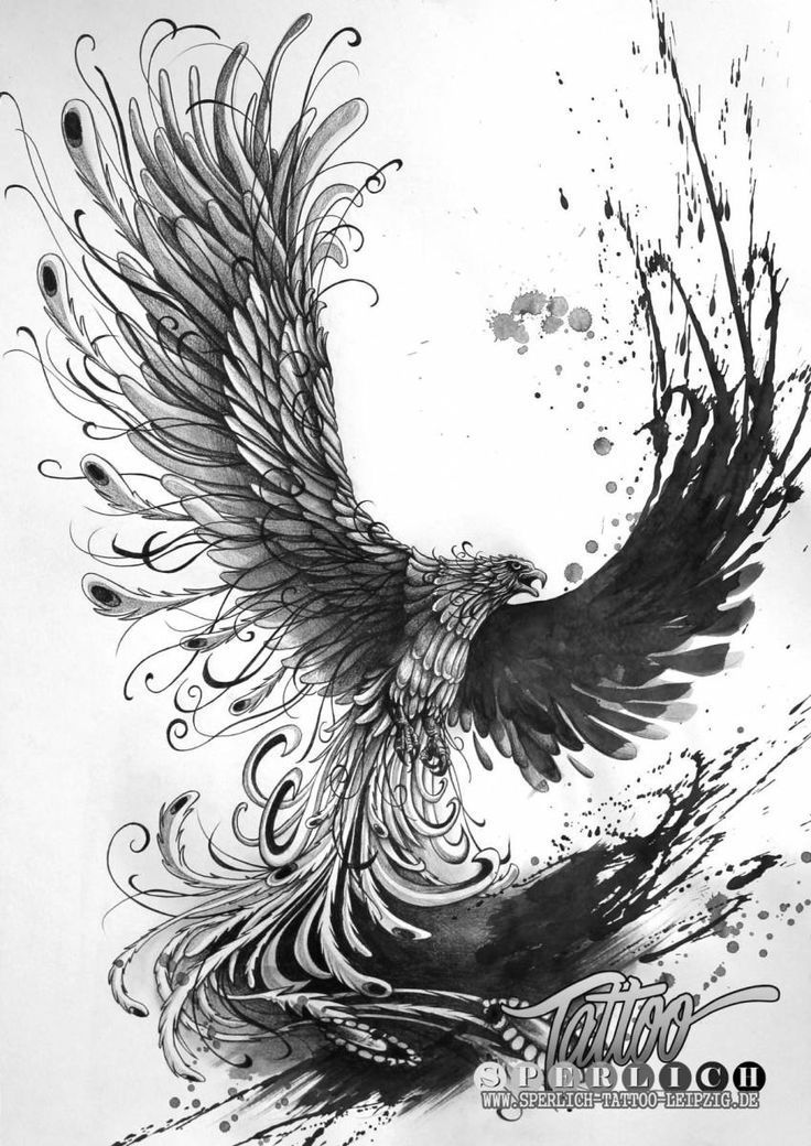 Image Result For Phoenix Tattoo Templates For Free Free Image Phoenix Phoenixtattooback Phoenix Tattoo Tattoo Templates Bird Drawings