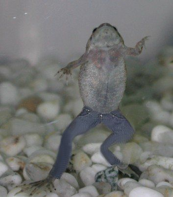 African Dwarf Frog Detailed Care Instructions Dwarf Frogs Pet Frogs African Frogs