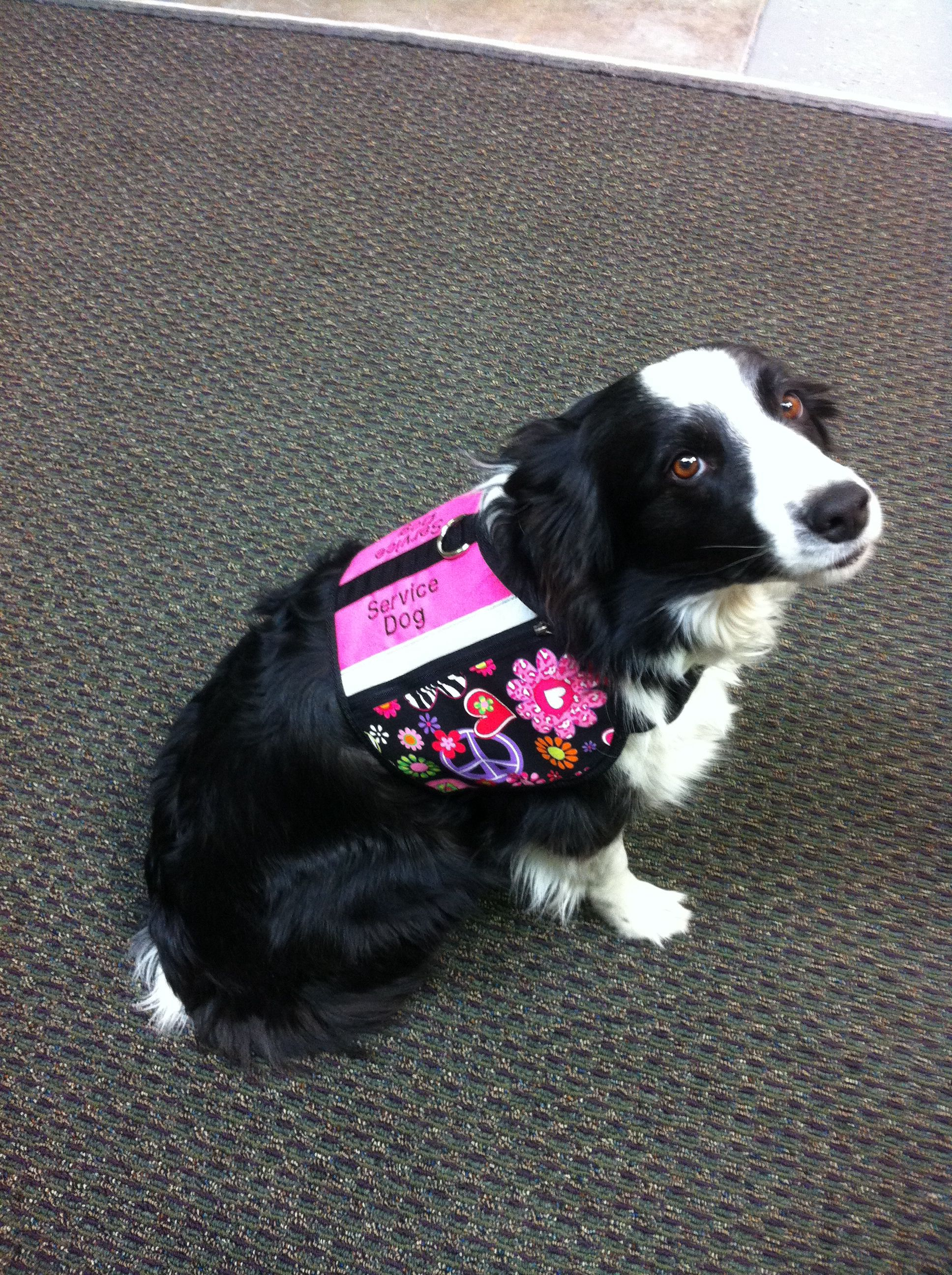 New Service Dog Vest For Riley Made By Michelle G Service