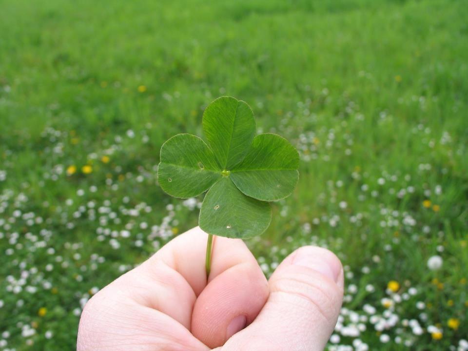 4 leaf clover for you