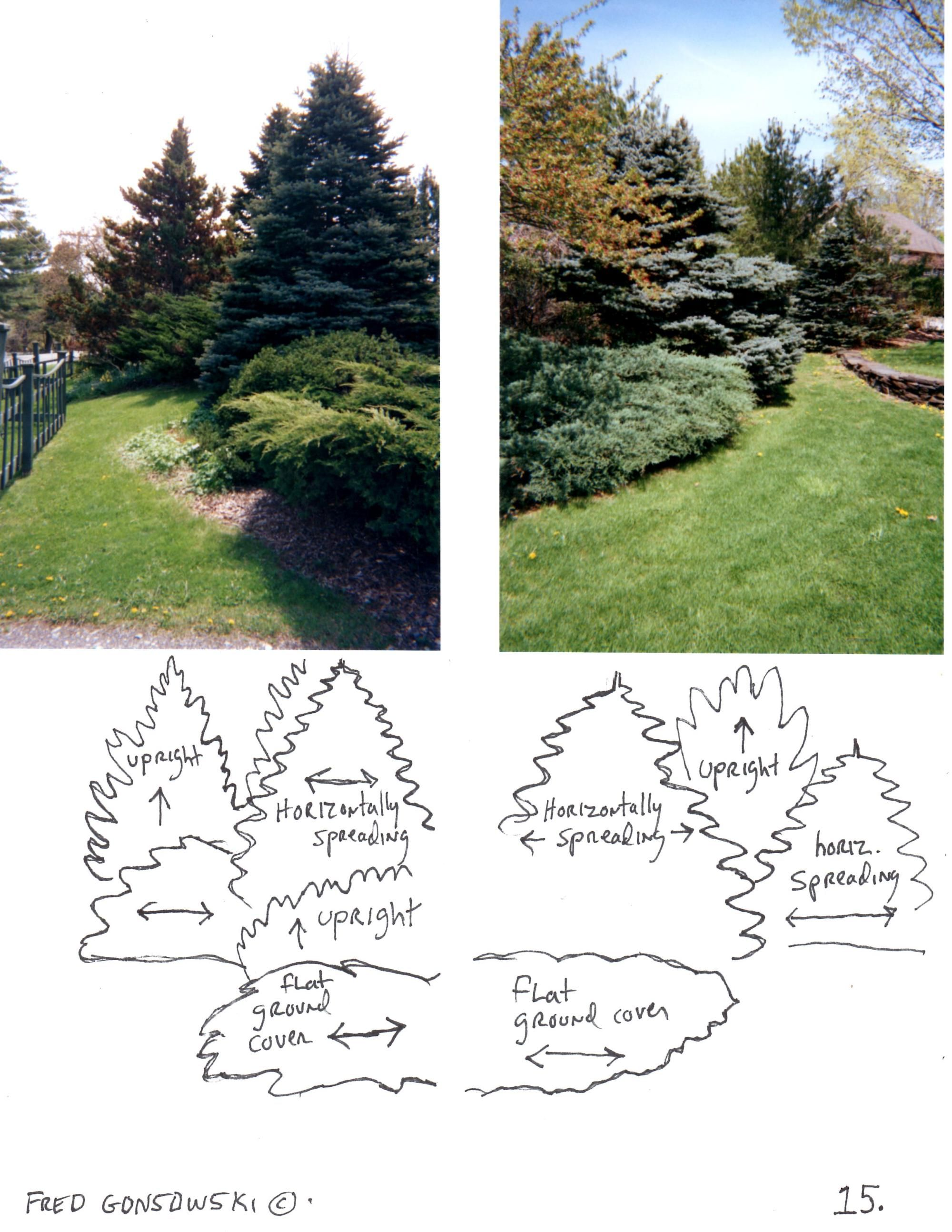 Looking at Evergreens in the Garden | Fred Gonsowski Garden Home ...