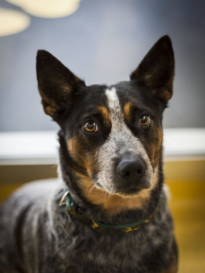 RSPCA Australia, adopt a pet. Please take a look ) Dog