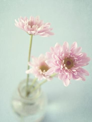 Fotodruck: Pretty in Pink von Susannah Tucker: 24x18in