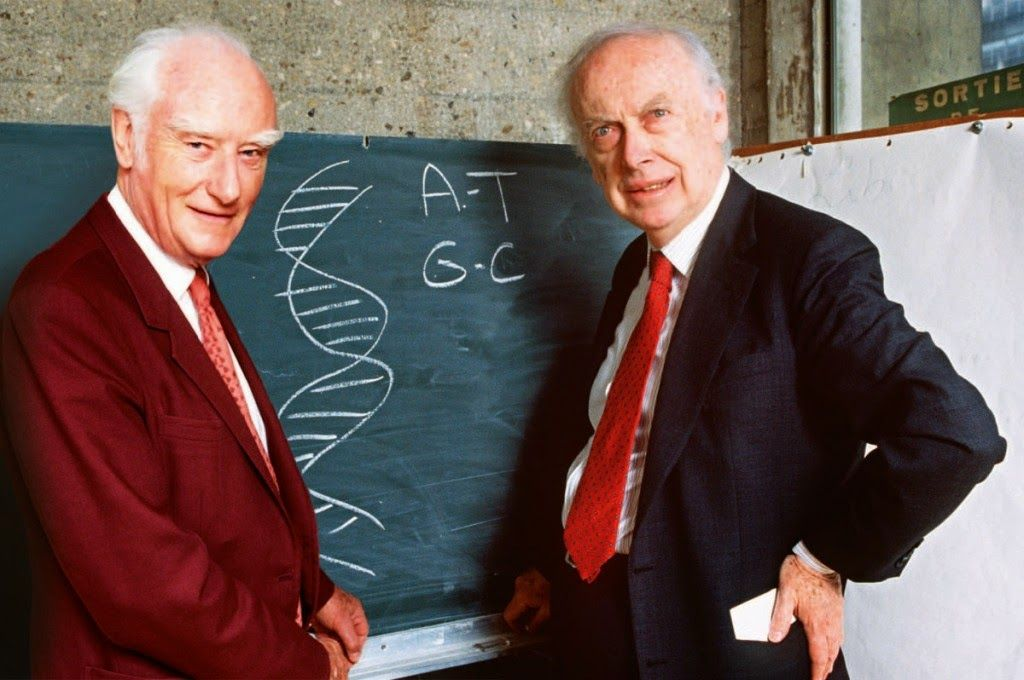 1953 James Watson Y Francis Crick Descubren La Estructura En Doble Helice Del Adn James Watson Dna Nobel Prize
