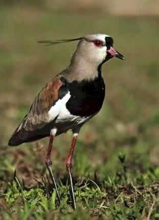 Bird Animais Aves Rio Grande Do Sul