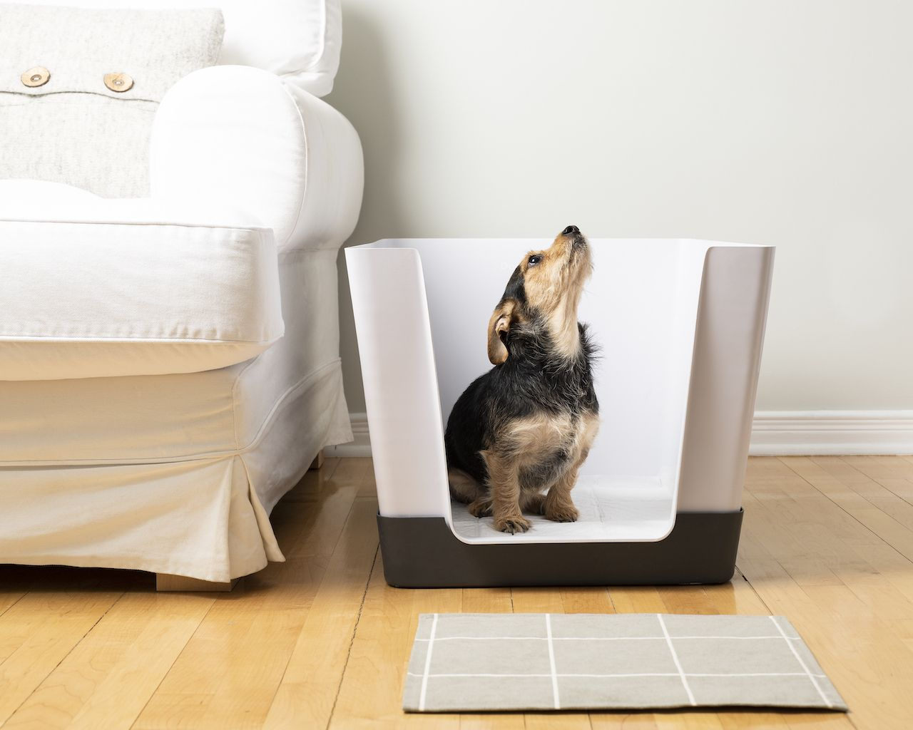 Doggy Bathroom An Indoor Potty Solution For Small Dogs Indoor