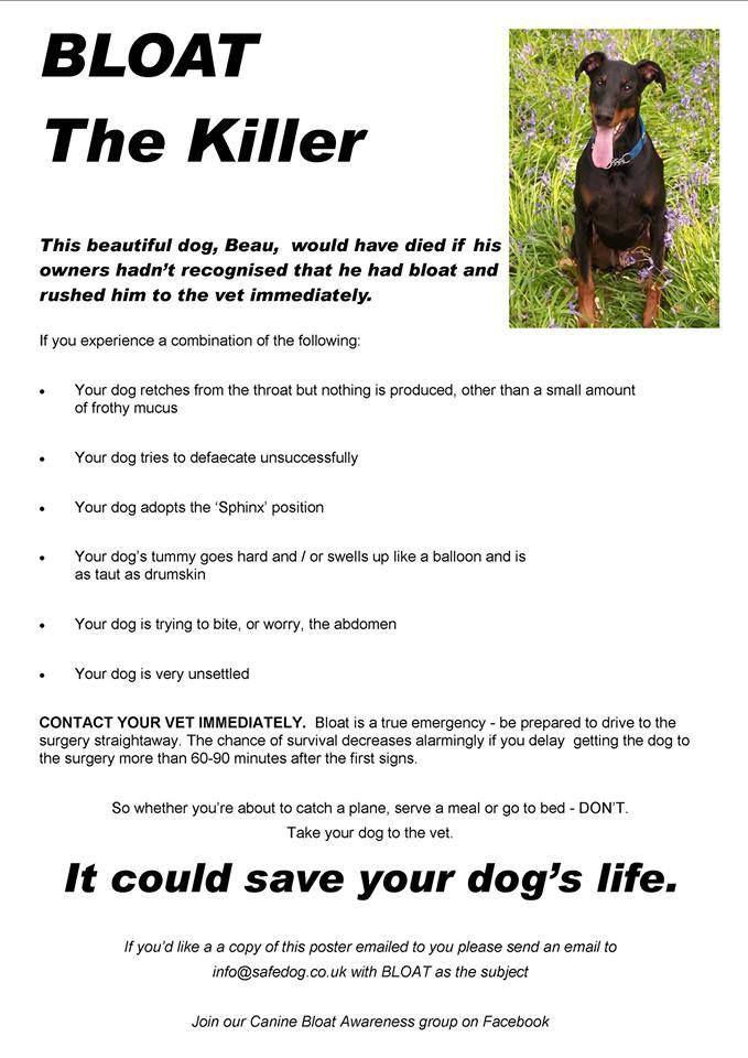 Pin On Pet Safeguards