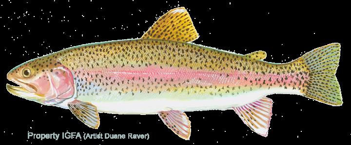 trout Google Search Trout, Fish pet, Fish