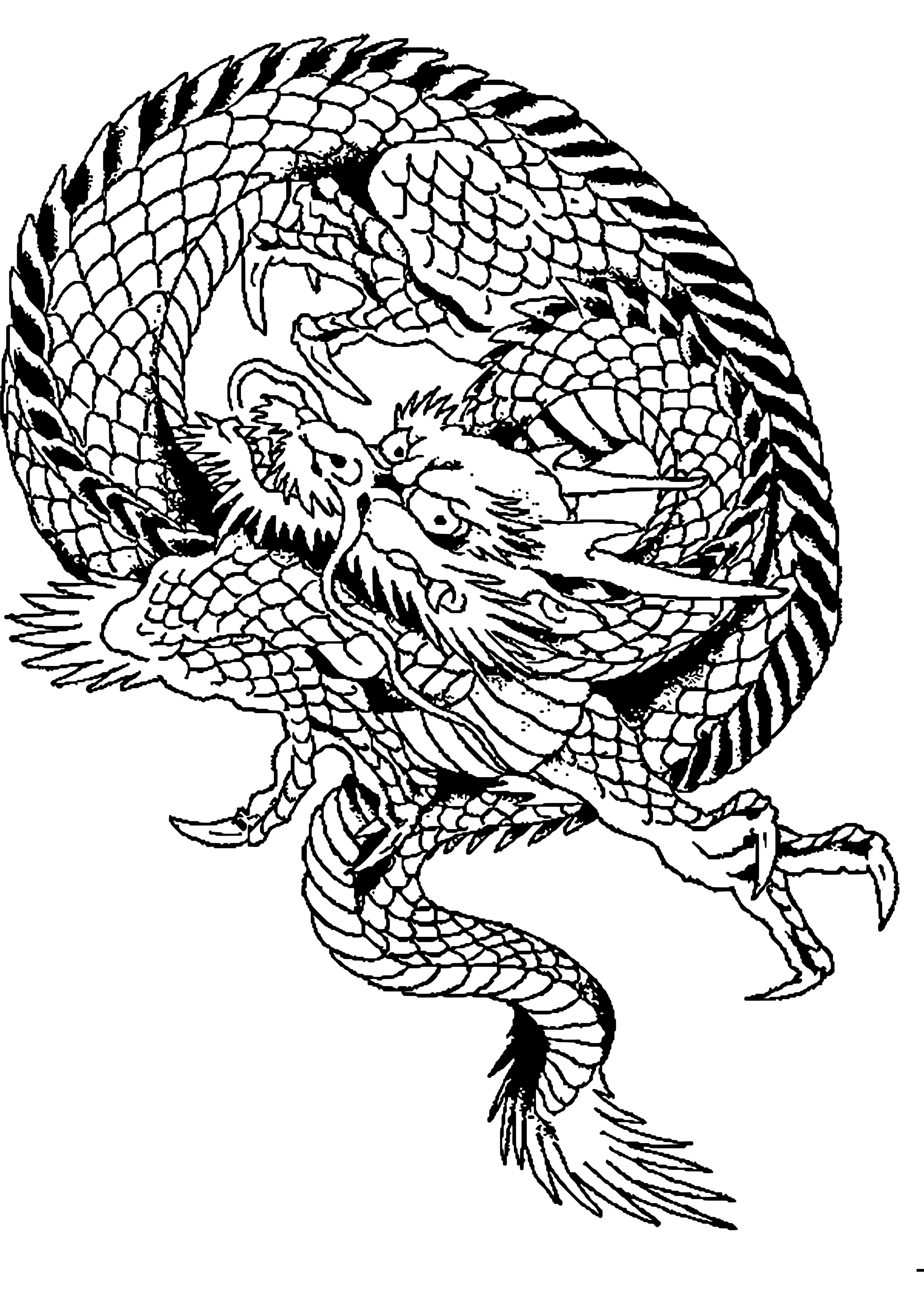 disegni di draghi  dessin À imprimer prefix de dragon