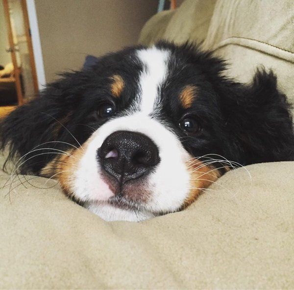Photo of Cachorro de perro de montaña