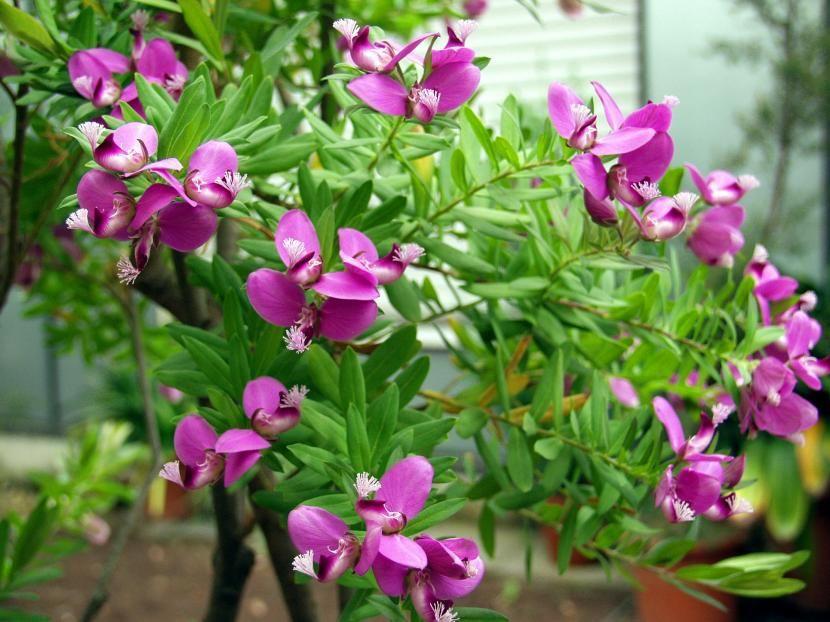 Selección de arbustos para climas secos