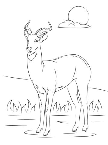 Cobo de Uganda Dibujo para colorear | animales | Pinterest ...