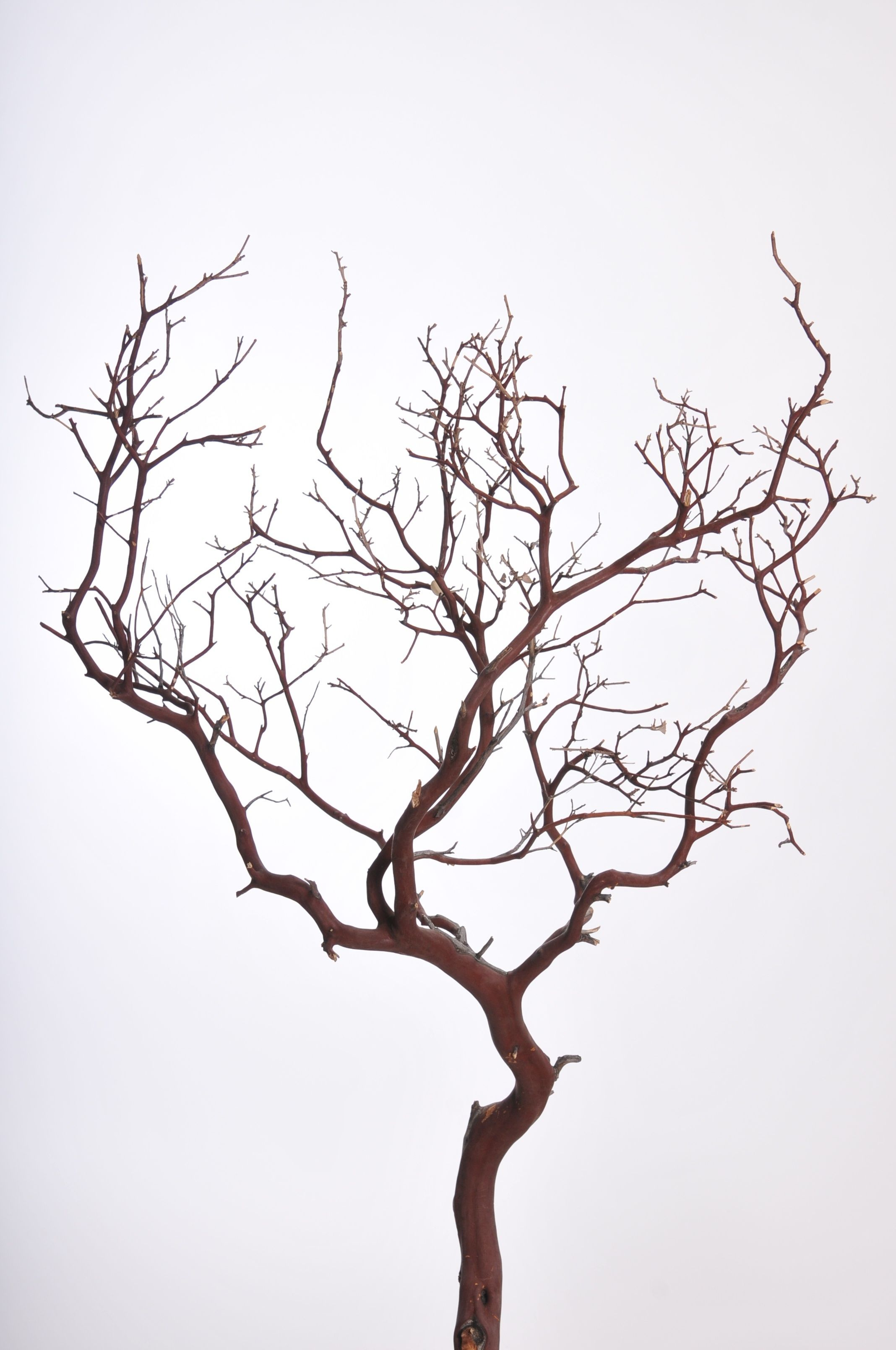 Manzanita Branches In Natural Coloring Dried Preserved Note Yes These Are Expensive And The Branch Centerpieces Wedding Manzanita Branches Branch Decor