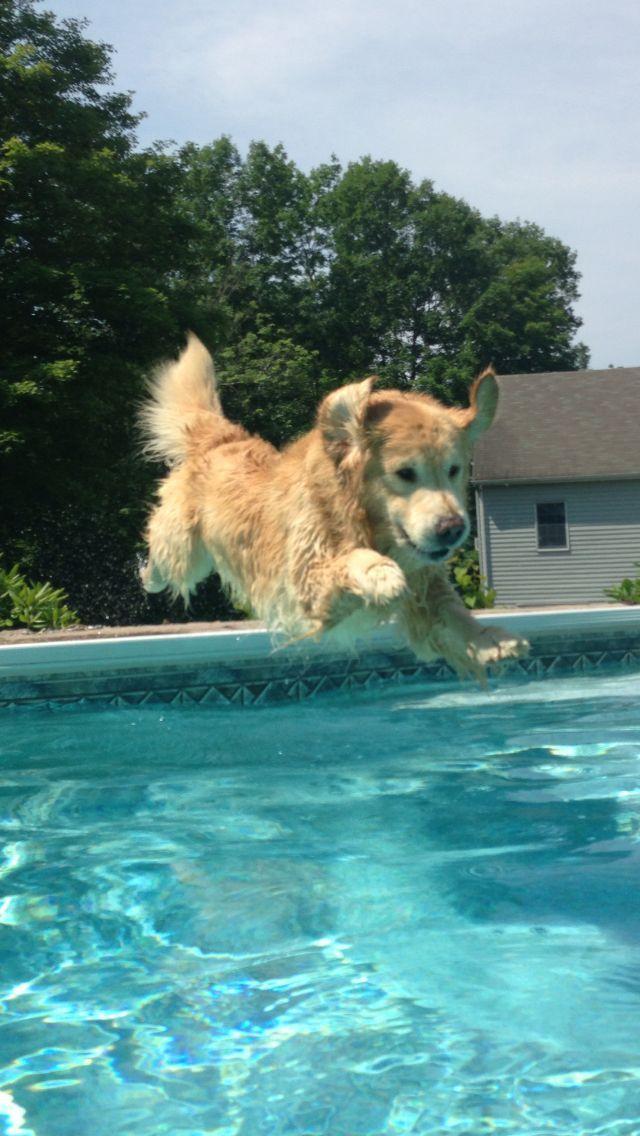 Golden Retriever Pure Joy Goldenretriever Dogs Golden Retriever Golden Retriever Puppies