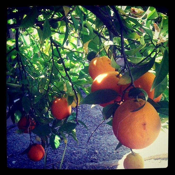 More oranges!
