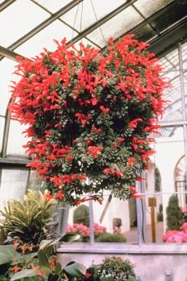 What Outdoor Hanging Flowering Plants Can Handle Full Sun And Heat Hanging Flowering Plants Hanging Plants Hanging Flower Baskets