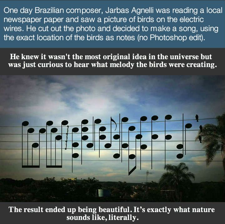 This Photo of Birds on the Electric Wires turned Into an Intriguing Musical Piece.