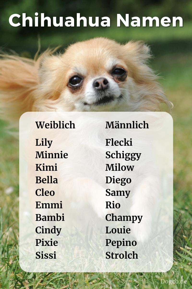 Chihuahua Namen Susse Namen Fur Madchen Aussergewohnlich Schone Namen Fur Rude In 2020 Chihuahua Namen Chihuahua Hundenamen