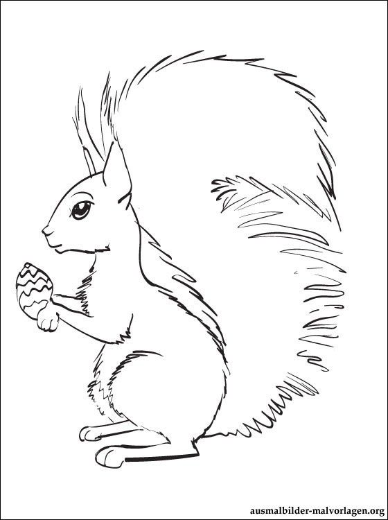 Ausmalbilder von Eichhörnchen zum ausdrucken