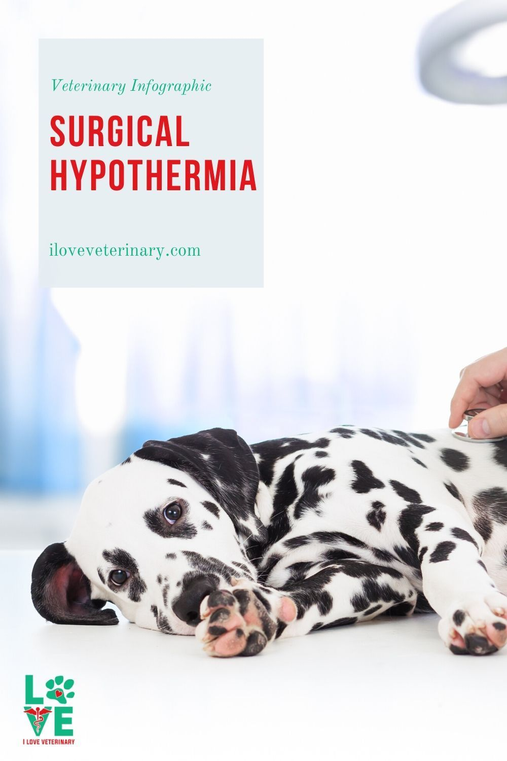 Surgical Hypothermia I Love Veterinary In 2020 Veterinary