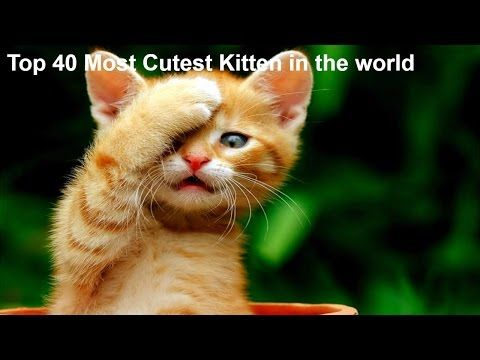 Best Cute Kittens Videos Compilation New Most Funny Funny