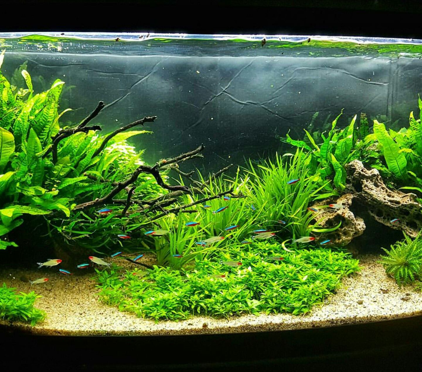 Aquascape With Cardinal Tetras And Rummynose Tetras By Diy Aqua Pros Aquascape Aquarium Aquascape Planted Aquarium
