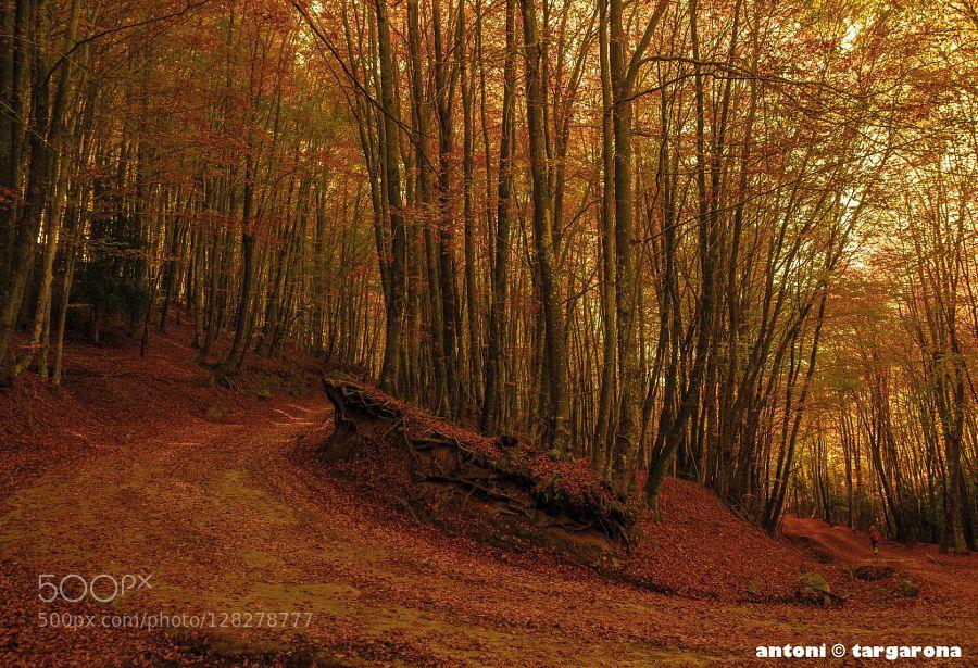 LA CURVA by targagibert #nature