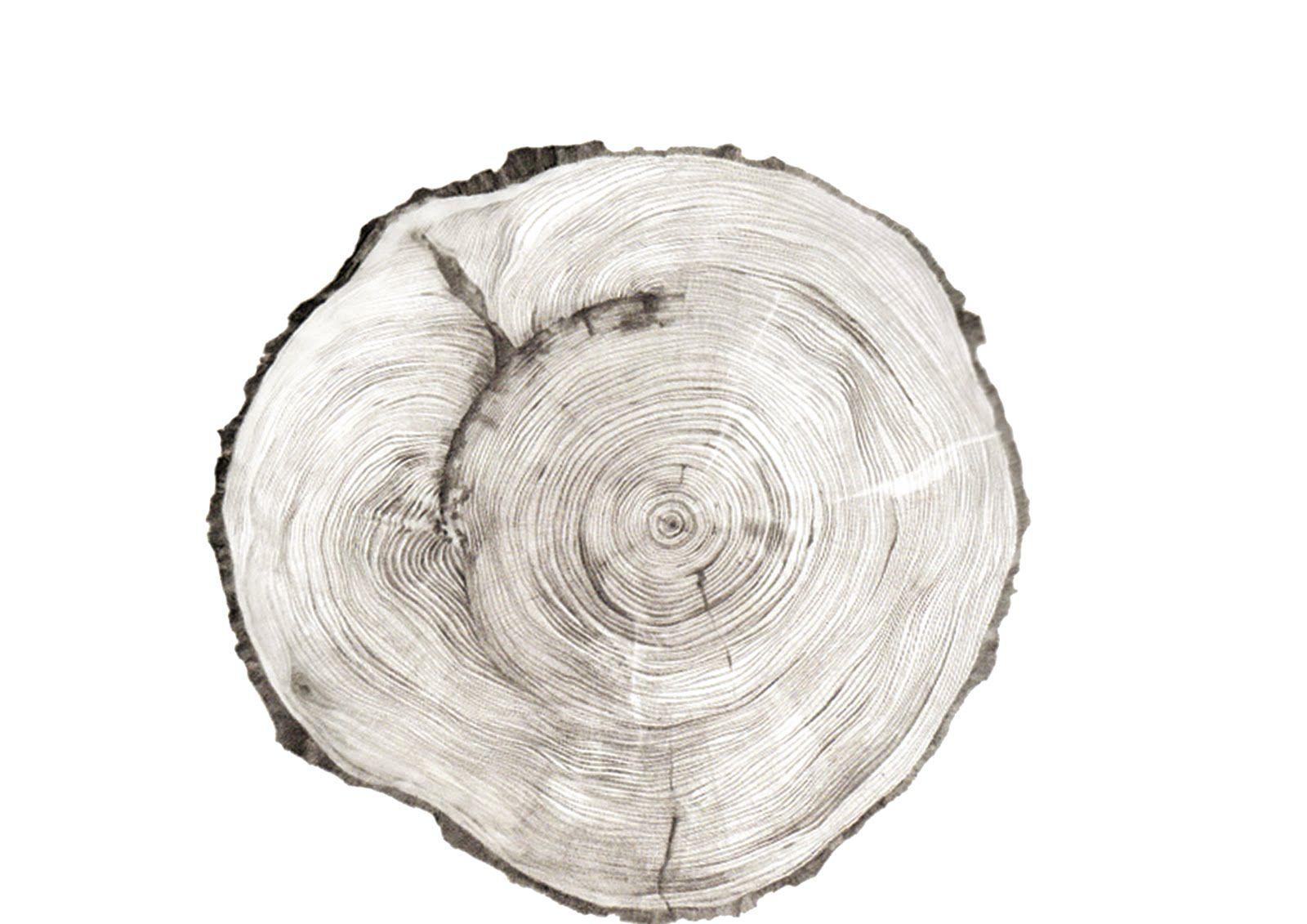 tree ring illustration � pinteres�