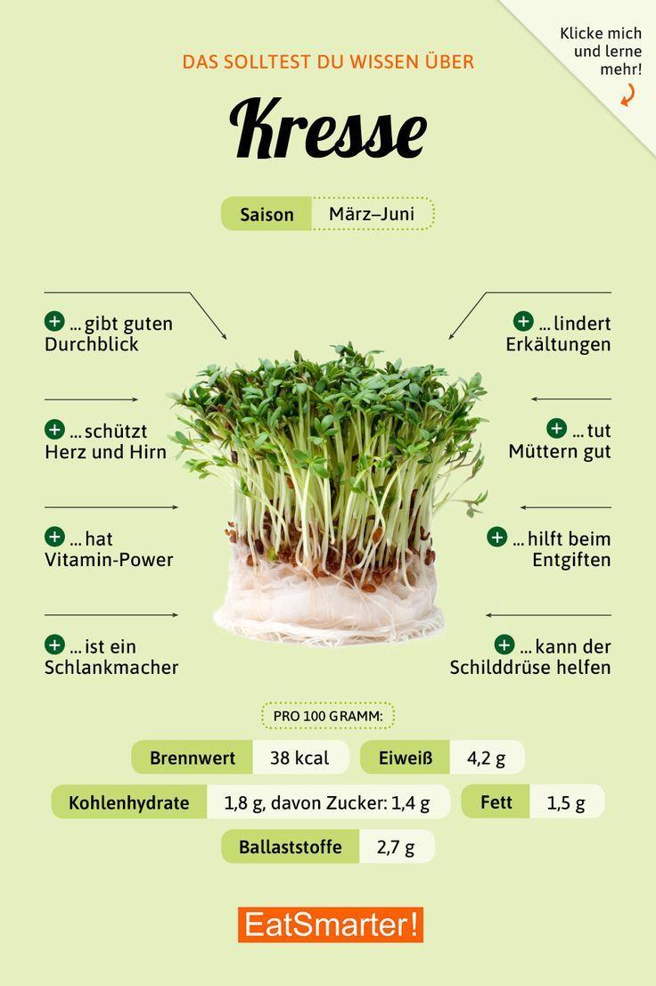 Das solltest du über Kresse wissen! | eatsmarter.de #ernährung #infografik #kresse