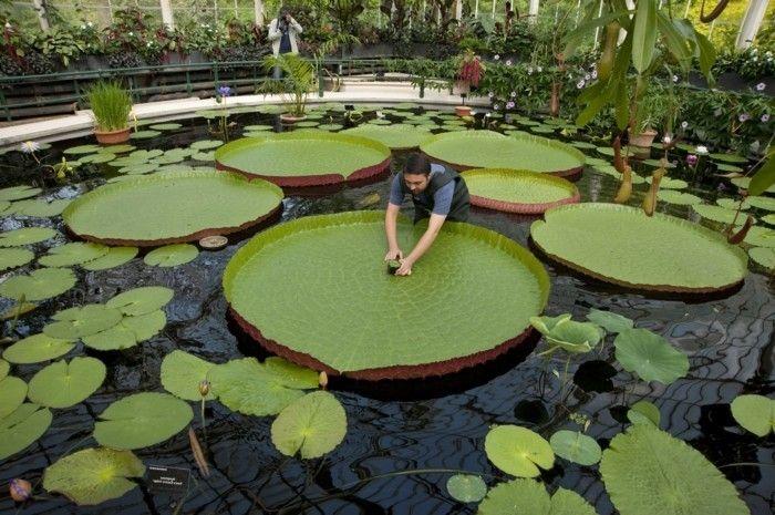 Teich bepflanzen ausgefallene pflanzen f r teich pool for Ausgefallene zimmerpflanzen