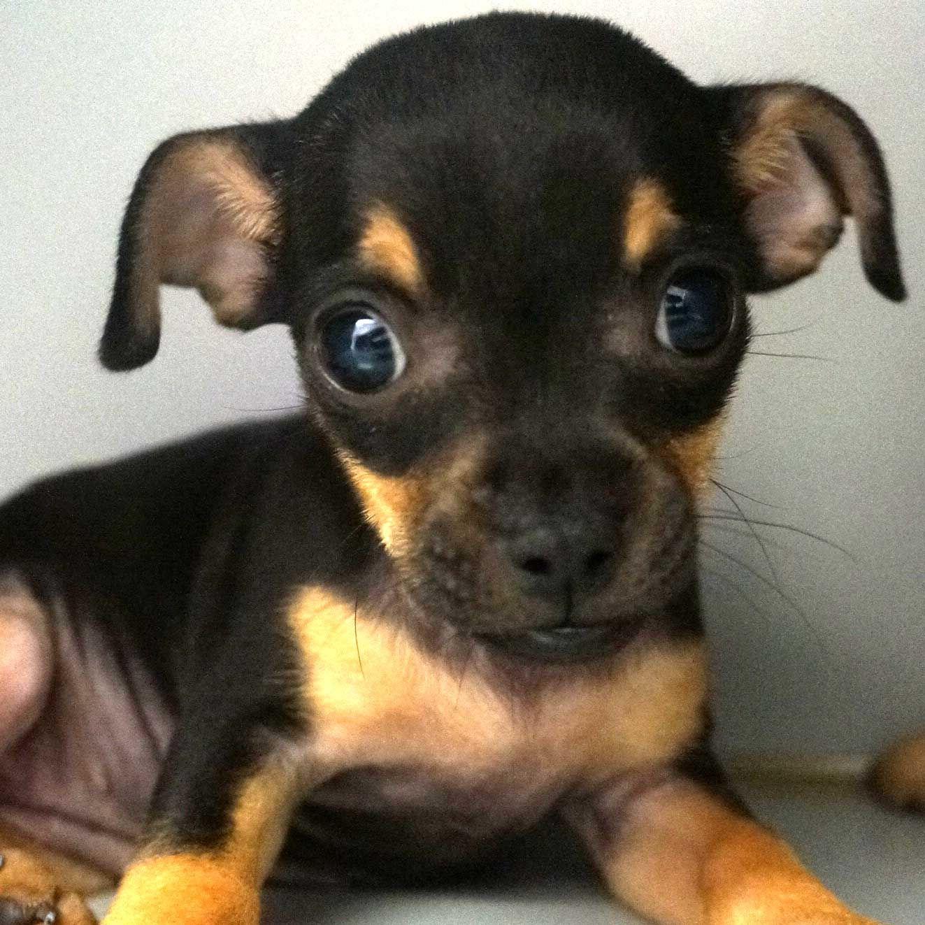 Adopt a Pet Dog adoption, Pet adoption, Animals