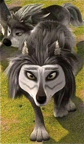 winston | Alpha and Omega in 2019 | Alpha wolf, Omega, Wolf